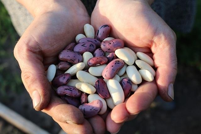 Diese Nahrungsmittel wirken gegen Blähungsgerüche